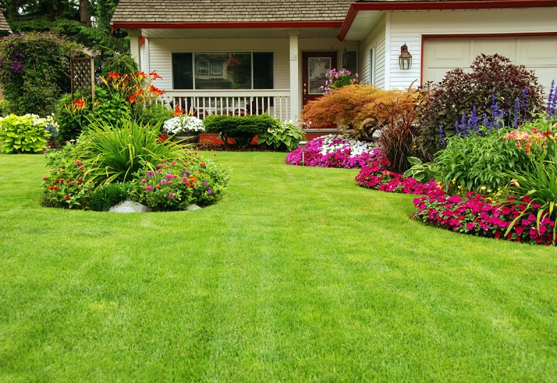 Make your garden beautiful with carpet grass